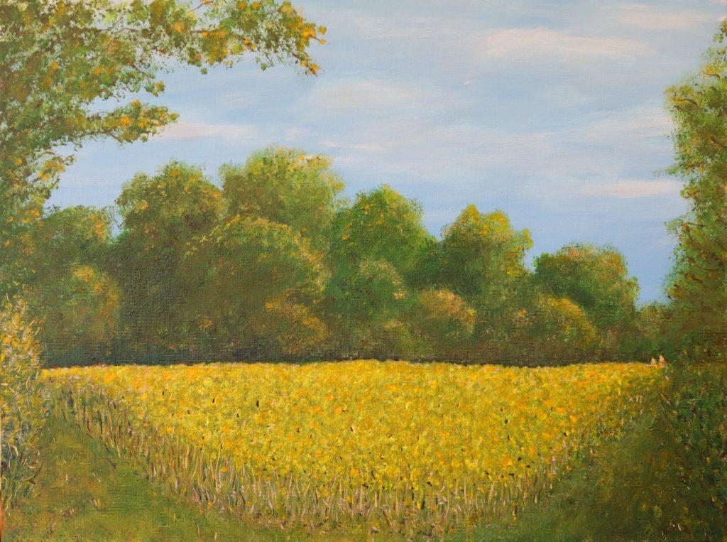 September corner of Sunflower field