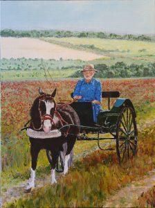 Jack - pony and trap through poppy field